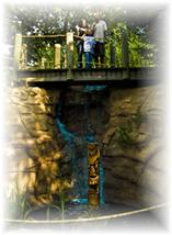 tiki-action-park-bridge